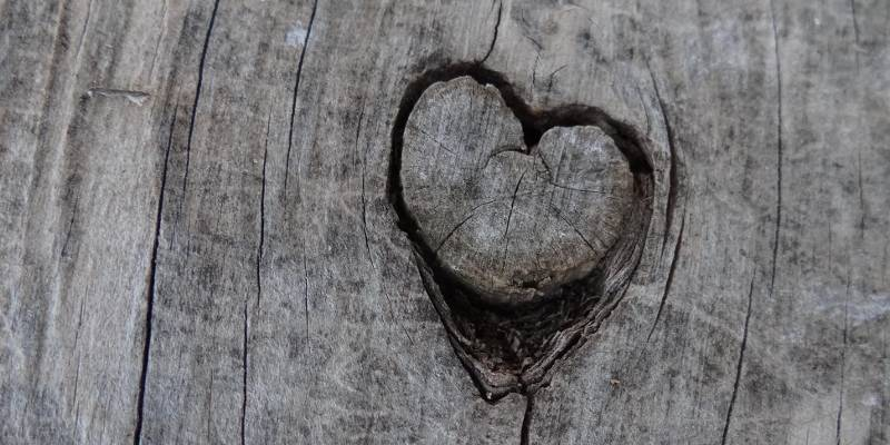 Amor Corazón grabado en un tronco